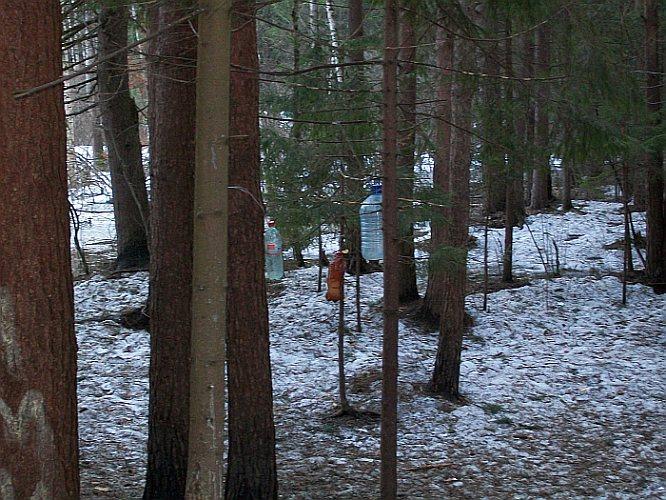 Дубна. Лес на Черной Речке. Кормушки птиц. Апрель 2011 года.